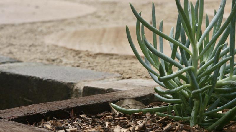 landscape designer sydney example garden
